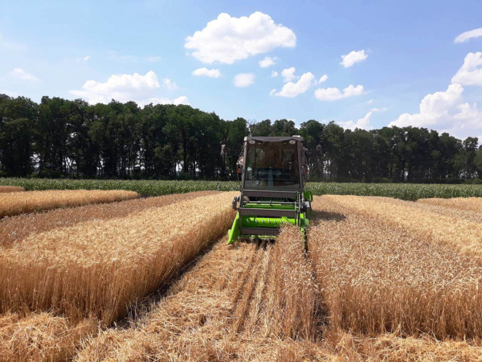 Что влияет на урожай озимых зерновых и количество погибших растений
