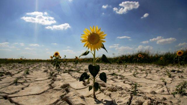 Украина в условиях глобального потепления