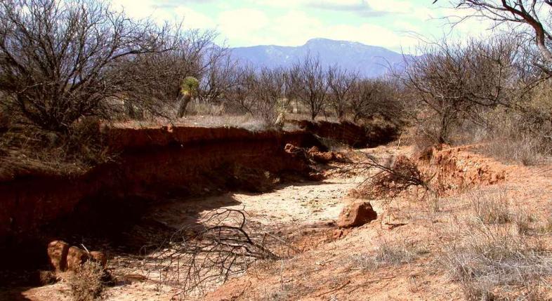 Эрозия почвы: основные виды и проблемы