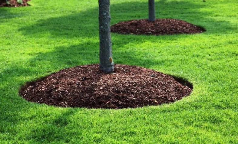 Мульчирование почвы: потребности и материалы