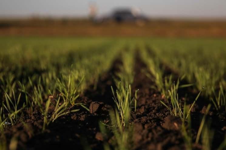 Украинские посевы озимых пострадали из-за потепления