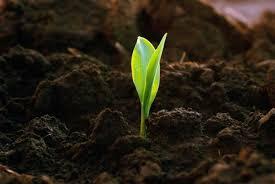 Как обезвоживание почв сказывается на новых посевах